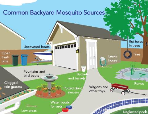 Illustration of Common Backyard Mosquito Sources, including: uncovered boats, open trash bins, fountains and bird baths, clogged rain gutters, buckets and barrels, potted plant saucers, water bowls for pets, wagons and other toys, leaky hoses, low areas, rot holes in trees, tires, ponds, and neglected pools.